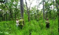 Development prospect for forest grown for economic purposes