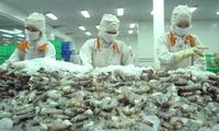 Shrimp exports to EU rebound