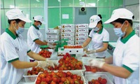 Export of fruits and vegetables to exceed 3 billion USD