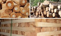Vietnam charts path to sustainable forest development