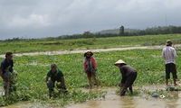 Farmers in Quang Nam cope with loss of land