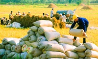 Vietnam more than capable of meeting rice export demand