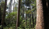 Effort to manage forest exploitation