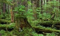 Local contribute to protecting natural forest