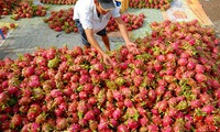 Vegetables export increased 44% in 6 months