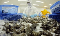 US to set higher anti-dumping tariff on Vietnamese shrimp