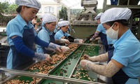 Vietnam supports Cambodia in cashew production