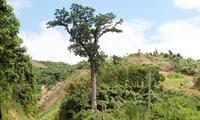 Vietnam introduces ancient Lim forest