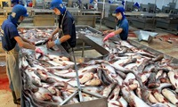China becomes biggest buyer of Vietnamese tra fish