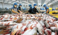 Tra fish exports surge to meet year-end demand