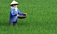 Vietnamese agriculture promotes sustainable development