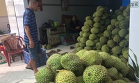 Durian prices in HCM City remain high despite oversupply