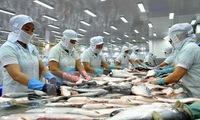 Vietnam's largest Tra fish importer