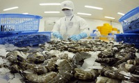 Vietnamese shrimp prices rise