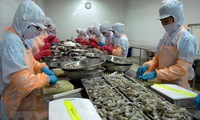August to bring good news for shrimp industry