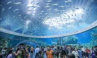 Marine life preservation at Vietnam's biggest oceanographic museum