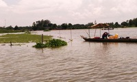 Flood waters bring hope and uneasiness to farmers in the Mekong Delta