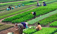 Vietnam's agricultural value moves up the global value chain