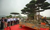 Vietnam chosen to host Asia-Pacific Bonsai Exhibition 2019