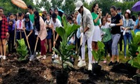 30,000 new trees to be planted across the country
