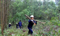 Double benefits from forests with FSC certification