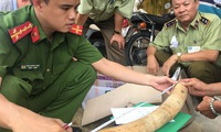 Nearly 20 kg of suspected elephant tusks seized in Binh Dinh