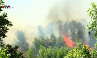 Wildfire in Quang Ngai destroyes 20 ha of forest