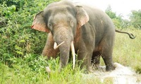 Elephant released to nature