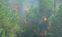 Prime Minister calls for urgent forest fire prevention and fighting
