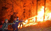 Three forests fires in one day in Ha Tinh
