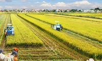 Vietnam faces challenges in agriculture