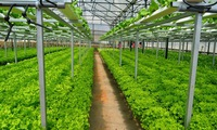 EVFTA benefits agriculture sector
