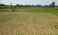 Drought leads to higher agricultural production costs
