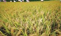 Vietnam's logistics services for agriculture