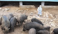 Netherlands shares experience in preventing African swine fever