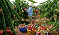 Enhancing competitiveness for Vietnamese agricultural products
