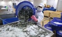 Vietnam's shrimp exports to EU increase sharply