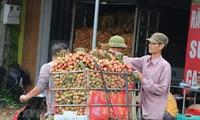Hai Duong prepares to export fresh lychees to Japan