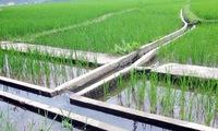 Vietnam adopts water resources strategy until 2030