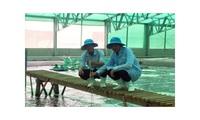Shrimp exports features positive signals