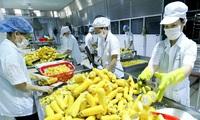 The Economist: Vietnam among safe economies in wake of COVID-19