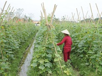 Thu nhập bình quân của nông dân Hà Nội sẽ đạt 40-45 triệu đồng/năm trong 5 năm tới