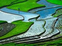 Ruộng bậc thang Việt Nam lọt Top thắng cảnh siêu thực nhất thế giới