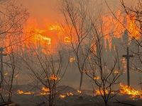 Nga: Cháy rừng kinh hoàng ở Siberia, thiêu rụi 1.000 ngôi nhà