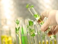 Áp dụng công nghệ sinh học trong việc chọn giống cây trồng