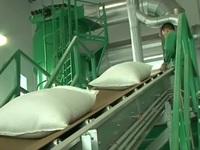 Giá gạo tấm Việt Nam cao hơn Thái Lan 15 USD/tấn