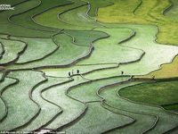 Ruộng bậc thang Yên Bái gây ấn tượng tại cuộc thi ảnh quốc tế
