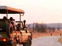 Săn bắn động vật hoang dã trở thành thú vui tại Zimbabwe
