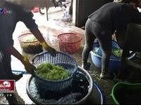Tiềm ẩn nguy cơ chết người khi ăn rau muống bào ngâm hóa chất