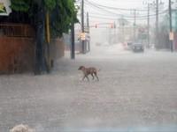 Cuba ban bố tình trạng khẩn cấp do bão Matthew